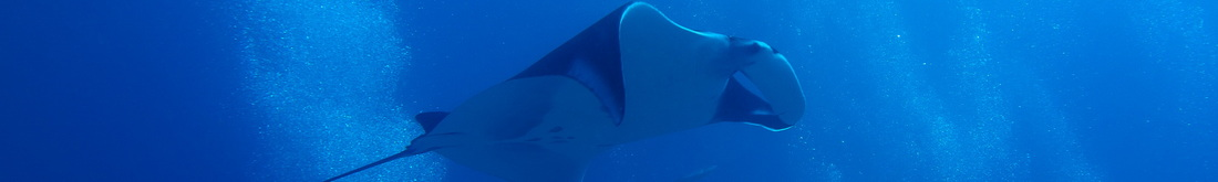 Khao Lak Scuba diving manta ray